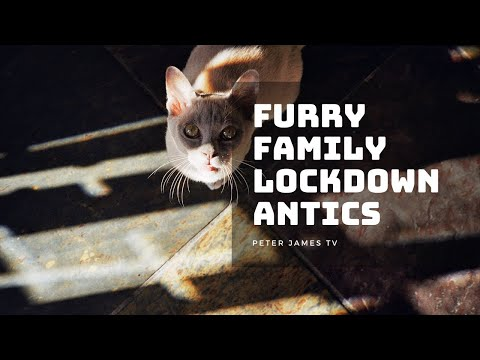 Furry Family Mischievous Antics – #Lockdown